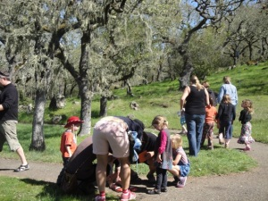 Scavenger Hunting in Oak Woodlands