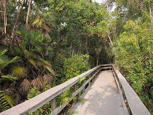 300px-Tropical_hardwood_hammock_on_Everglades_National_Park_Mahogany_Hammock_Trail