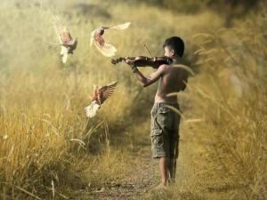 Boy-playing-violin-to-doves