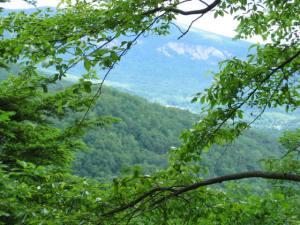 treetop viewsoftrees