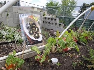 Artichoke garden inspiration